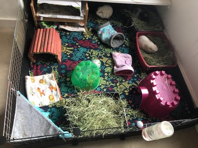 GPAW Blog: Environment
